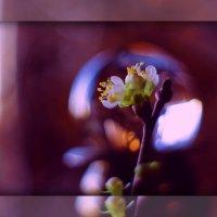 Гадание на весну :: Ирина Сивовол