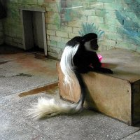 Длиннохвостая обезьяна. :: nadyasilyuk Вознюк
