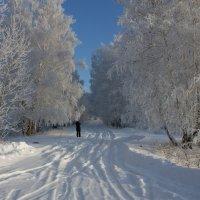 Зимняя сказка :: Светлана Медведева