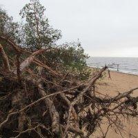 финский залив  после урагана патрисия :: georg