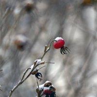 остывающие краски осени :: gribushko грибушко Николай