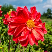 из цикла цветы :: Александр Ефименко