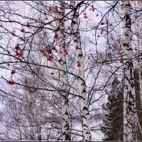 Зарисовка зимнего дня :: Владимир Холодный