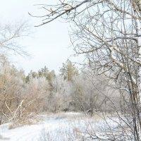зимний лес :: Михаил Шпигельман