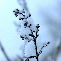 Первый снег пушистый, белый... :: Андрей Скорняков