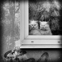 Мимолетное видение :: Николай Белавин