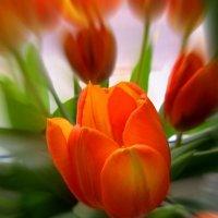 Весенний букет :: Сергей Карачин