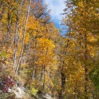 Дорога в лесу :: Олег