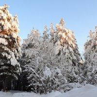 Поёт зима - аукает,мохнатый лес баюкает стозвоном сосняка... :: Ольга