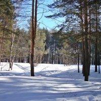 В лесу в солнечный день :: Лидия (naum.lidiya)