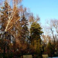 Декабрь в парке 2015... :: Тамара (st.tamara)