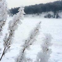Морозные кисточки :: Наталья Тимофеева