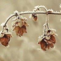 Мороз и хмель :: Cергей Дмитриев