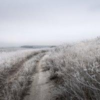 Морозное утро бесснежной зимы :: Генри