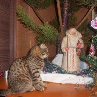котята тоже верят в новогоднее чудо :: Анна Прохорская