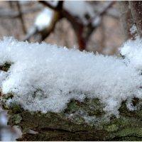 Хочу снега... :: Галина (Stela) Кожемяченко