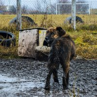 Жизнь... Собачья... :: ALEXANDR L