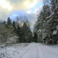 Прогулки по зимнему лесу.. :: Алла Кочергина