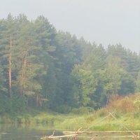 Сквозь утренний туман, показалась сежа рыбака. :: Людмила Ларина