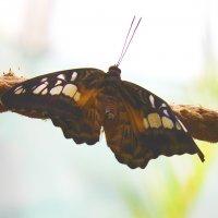 В доме тропических бабочек :: Светлана