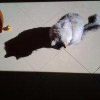 Обычных кошек не  бывает!:) :: Жанна Викторовна