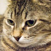Просто кошка Мурка :: Александр Паршев