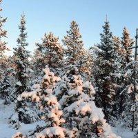 Снежный бал :: Ольга