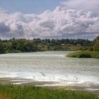 птицы на озере :: лиана алексеева