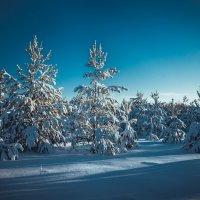 Зимняя сказка :: Дарья Семёнова