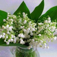 Бело-зеленое :: Наталья