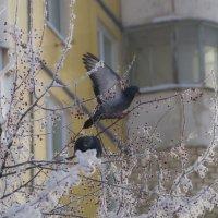 Прожорливые птицы :: Наталья Сиротина