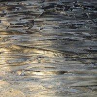 Первый лёд :: Вера Щукина