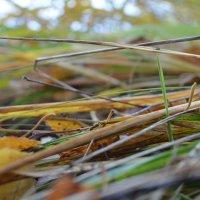 Осенняя трава :: Екатерина