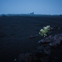 И на камнях цветут цветы... :: алексей афанасьев