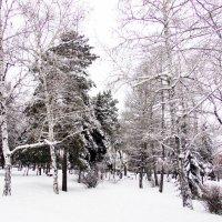 Берёза хороша в любое время года :: раиса Орловская