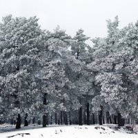 зимняя :: лиана алексеева
