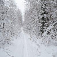 владения Деда Мороза :: сергей
