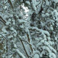 зимний лес :: дима драйвер