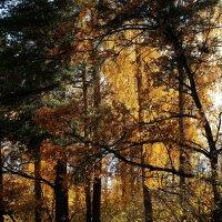 Осень.... :: Валерия  Полещикова