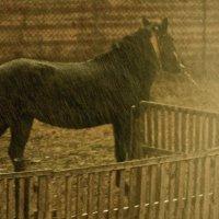 Дождь. Лошадь. Декабрь. :: Леонид Шаян