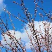Весеннее небо :: Светлана