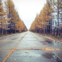Дорога в осень :: Роман Fox Hound Унжакоff