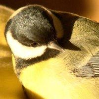 привет! :: linnud