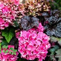Цветы :: Sergey Sergaj