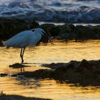 ловец золотых рыбок.... :: Павел Баз