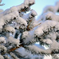 Зимушка-зима :: Татьяна Захарова