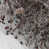 зарисовки прошлогодней зимы :: tgtyjdrf