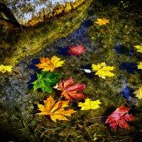 листья на воде :: Натали Акшинцева