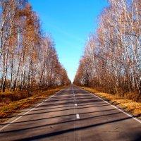 Дорога в осень :: Vladimir Smirnov
