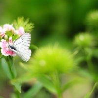 Бабочка! :: Яна